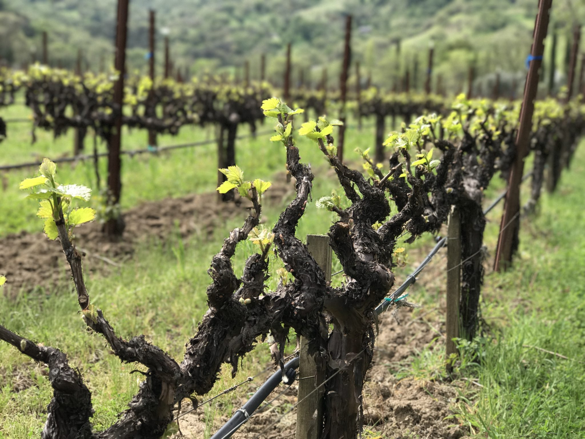 Napa-Valley-vineyards