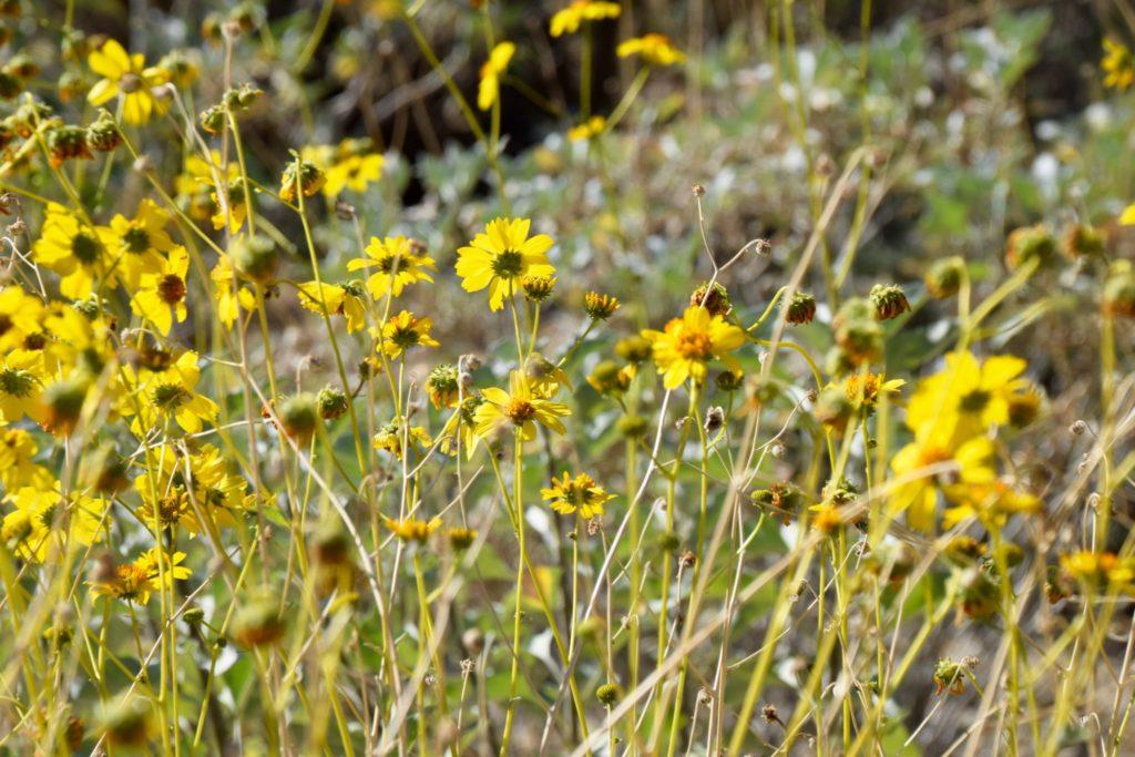 flowers in bloom at The Living Desert