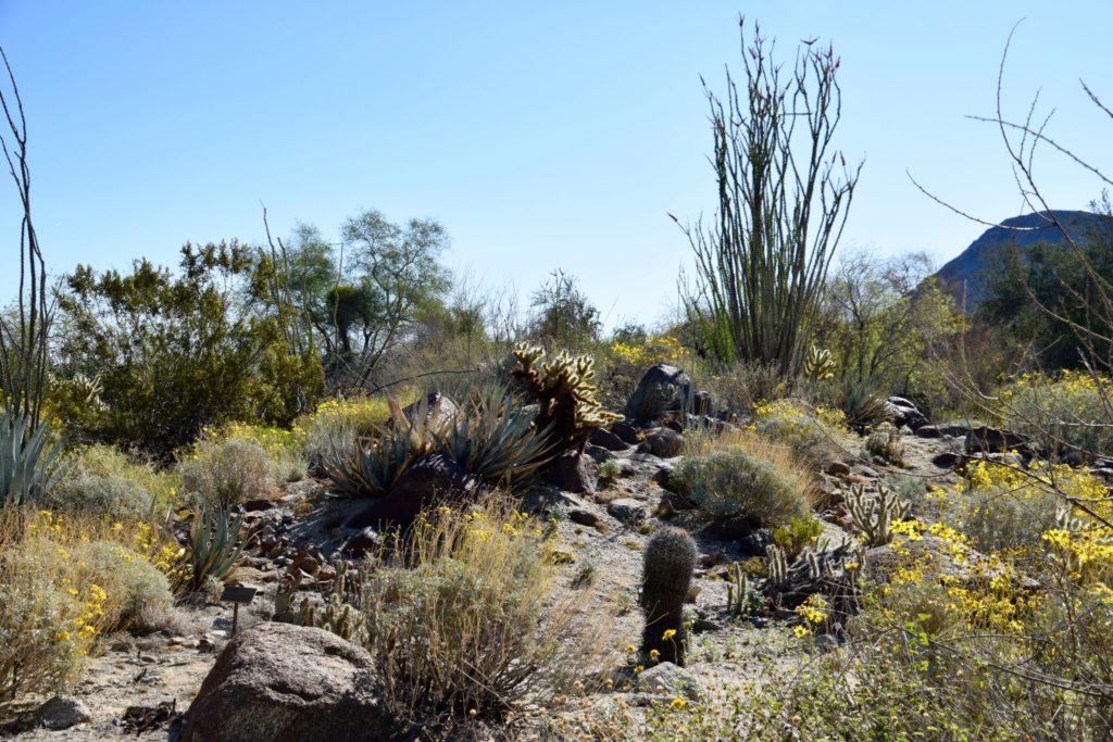 The Living Desert cactus gardens