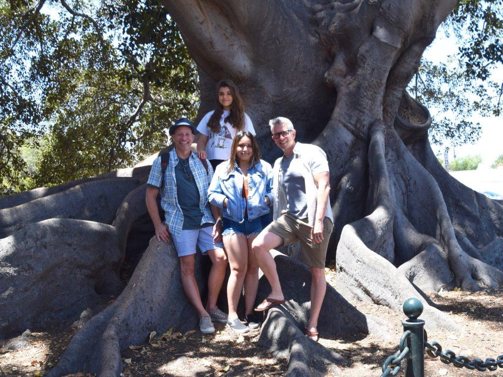 Moreton Bay Fig Tree Santa Barbara