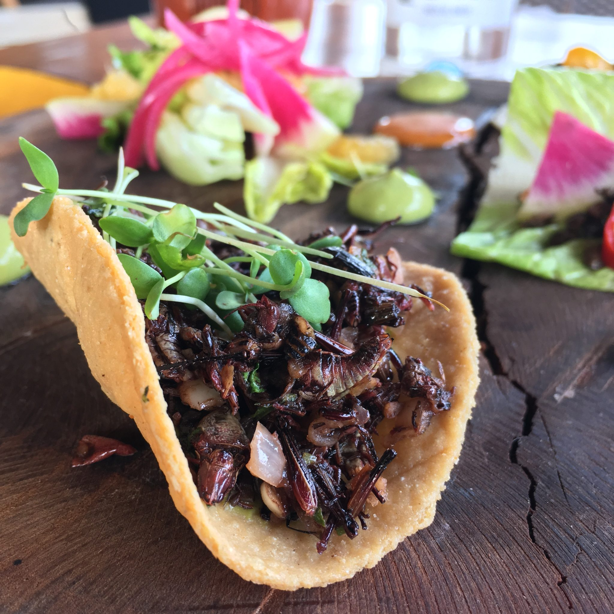 edible grasshoppers in Mexico