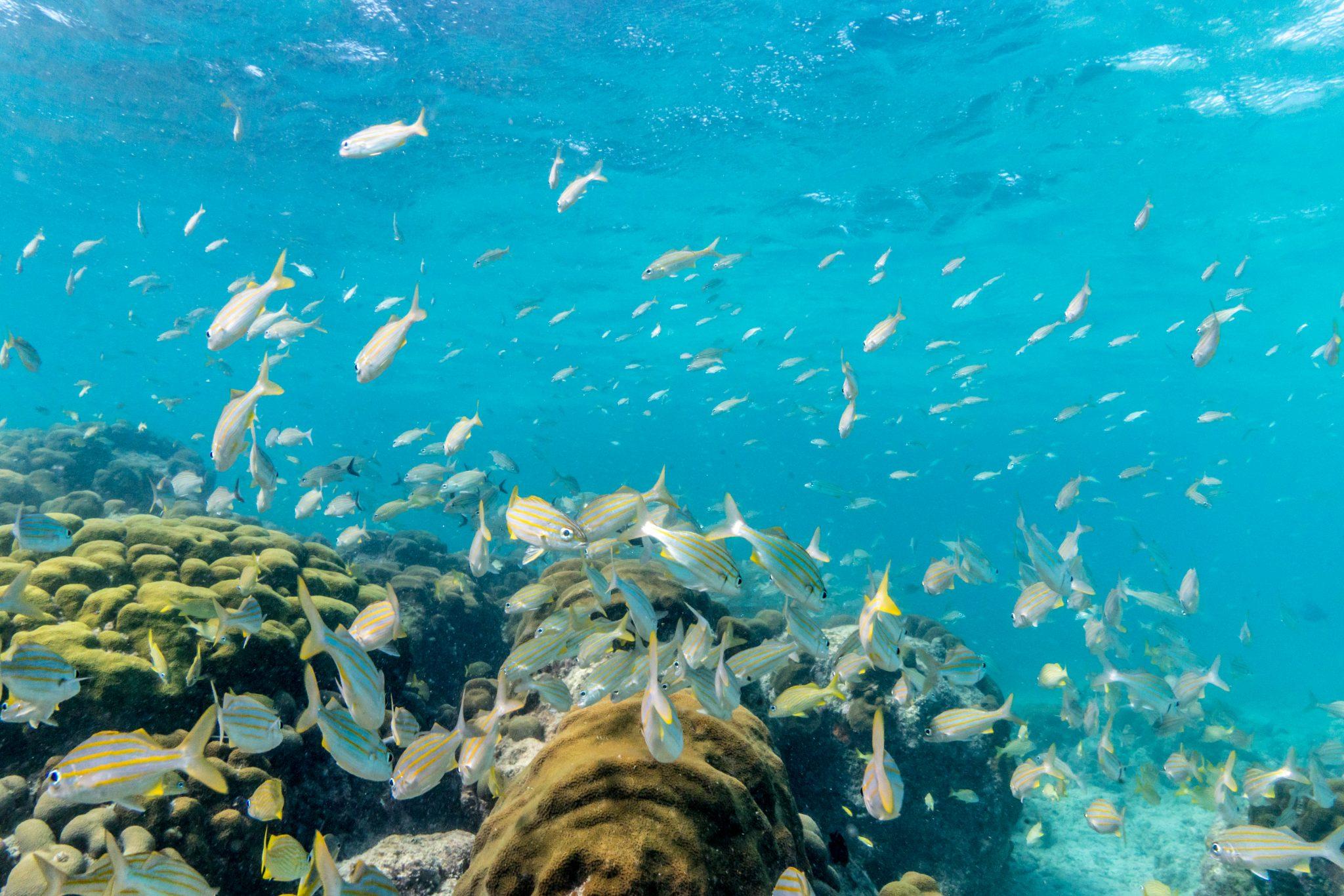 underwater scene in Aruba