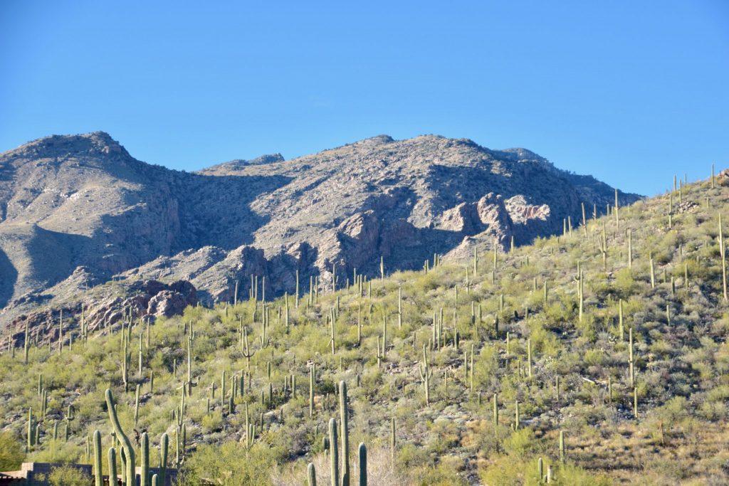 Tucson mountain landscape