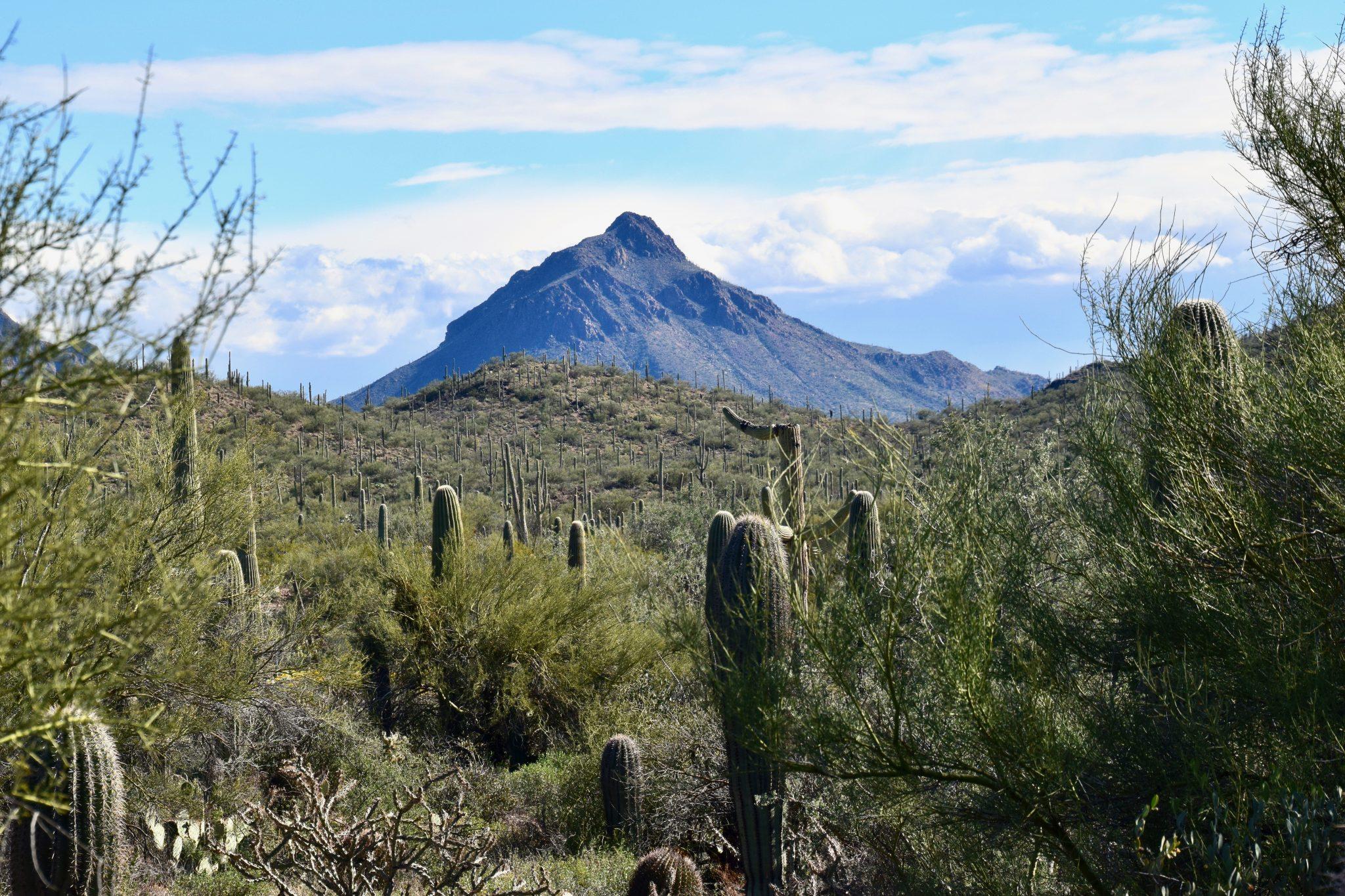 desert landscape in Tucson