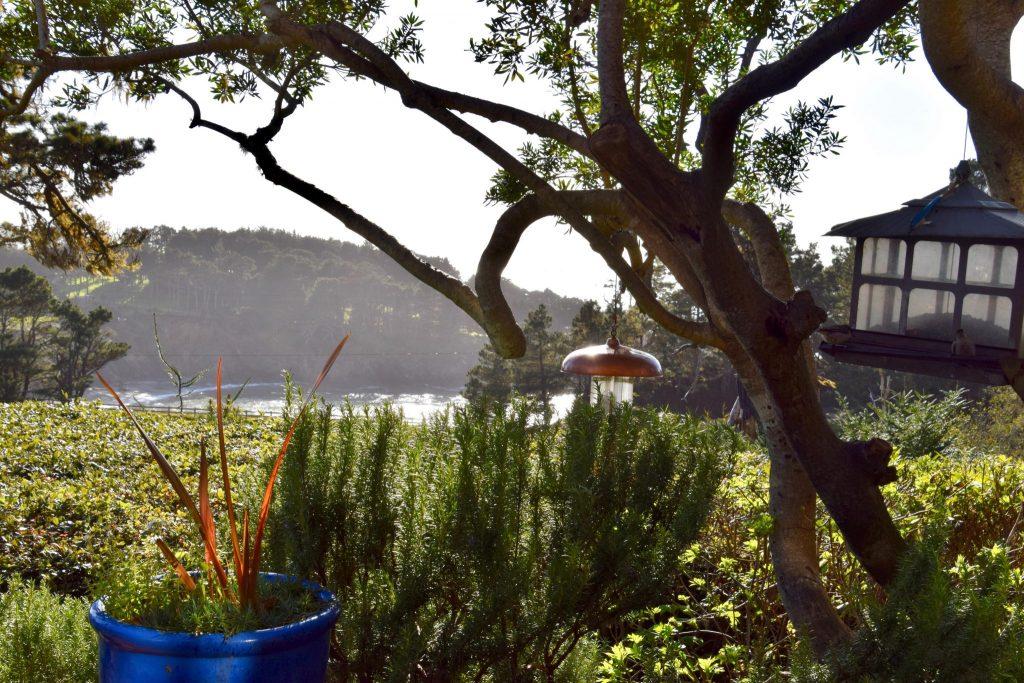 bird feeders in Mendocino