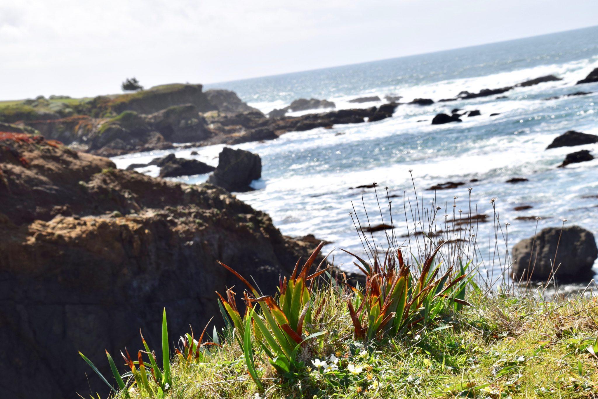 rocky cliff Northern California coast