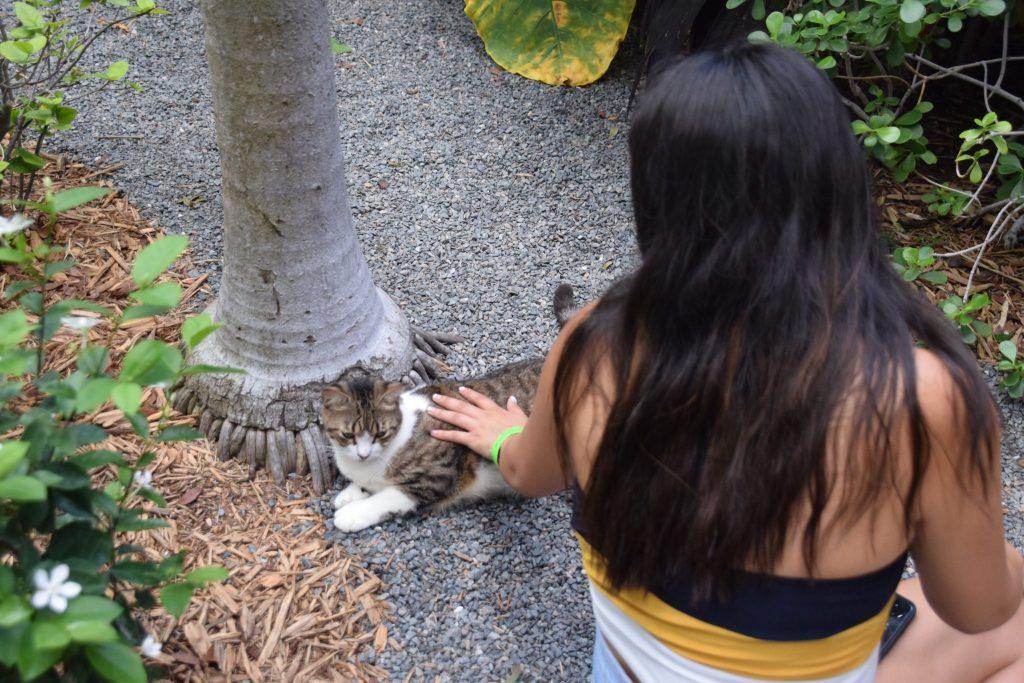 girls petting polydactyl cat at Hemingway House Key West