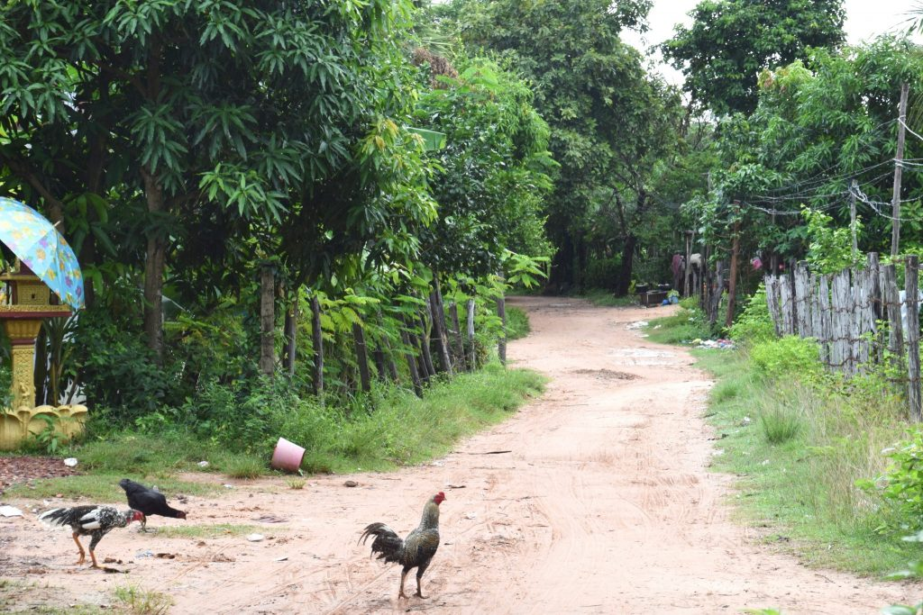 jungle trail through Cambodian jungle village with chickens