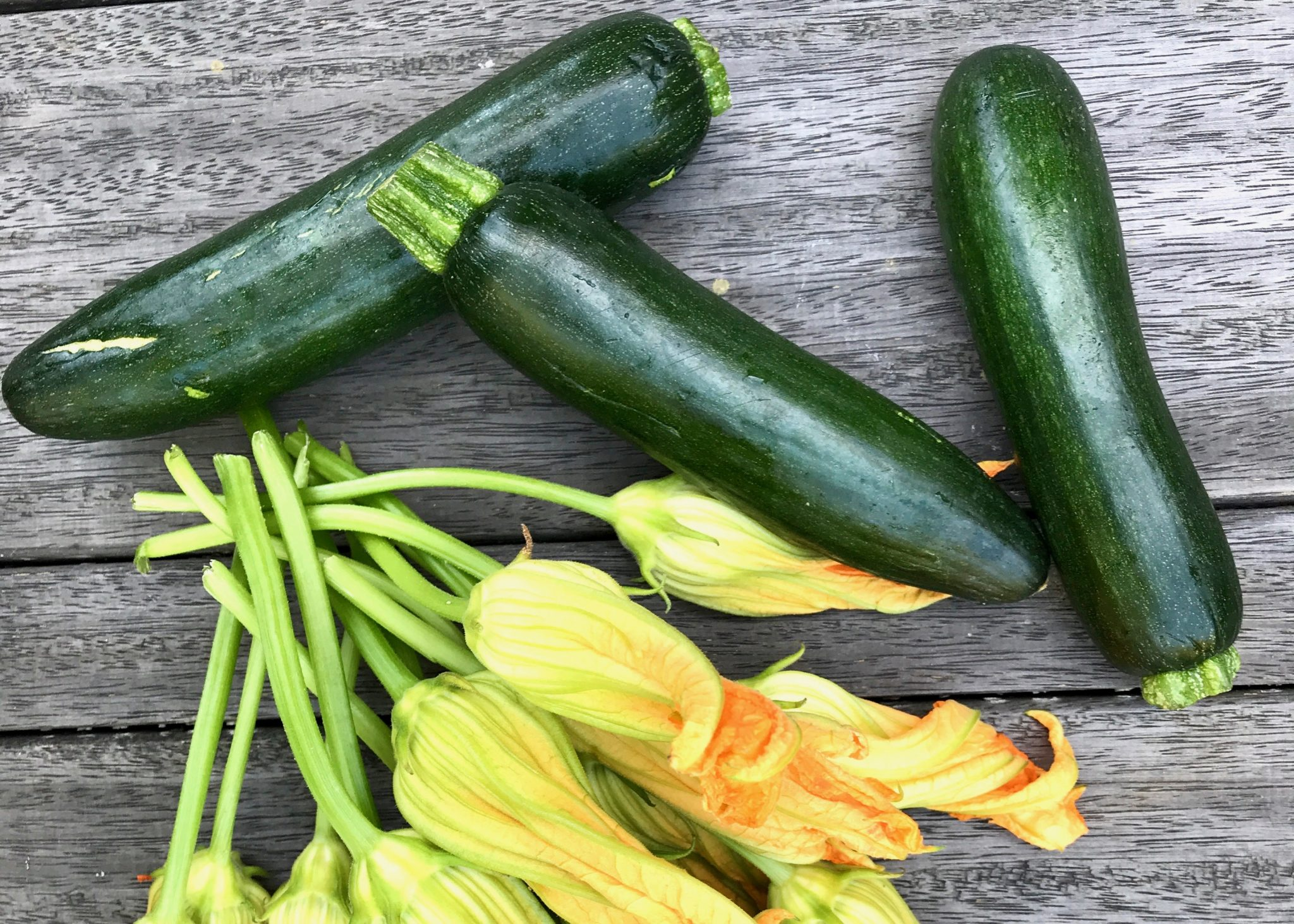 fresh zucchini and zucchini flowers picked from our own yard