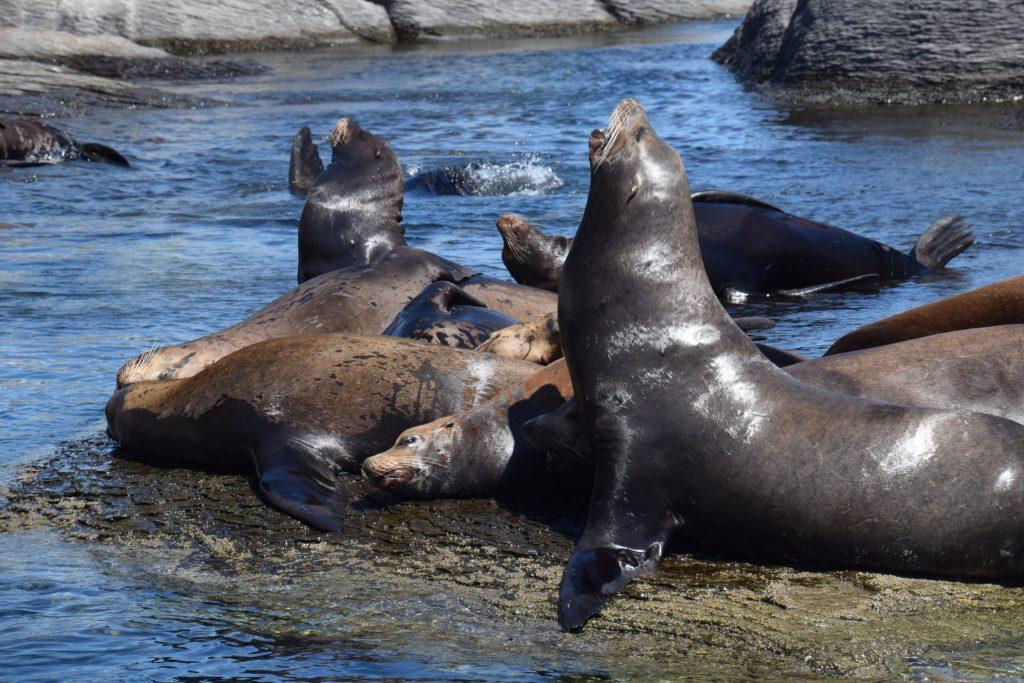 sea lions on rocks near Loreto, Mexico
