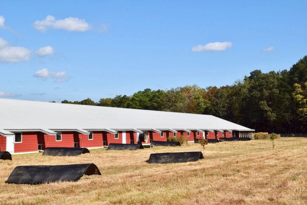 organic chicken farm with indoor/outdoor barn access