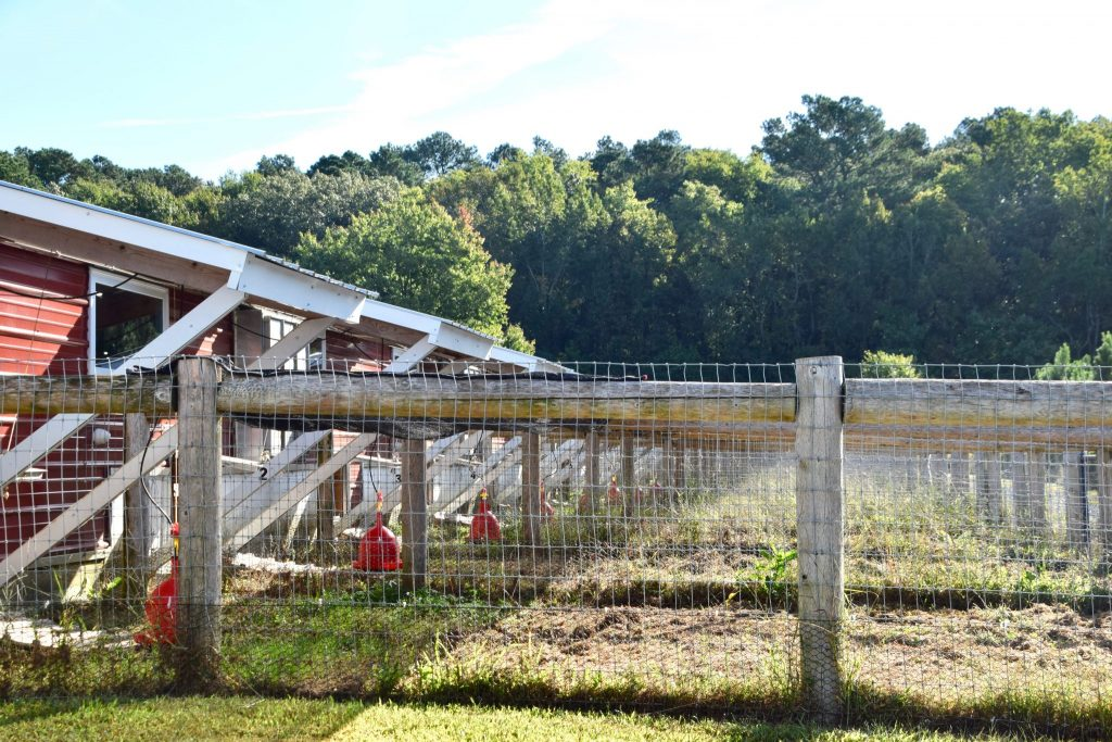 organic barns offer outdoors at Perdue Chicken