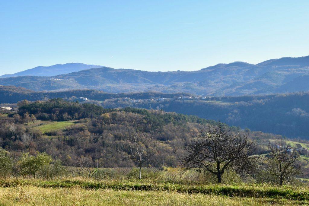 View of Motovun Forest from Karlic Tartufi, Istria, Croatia