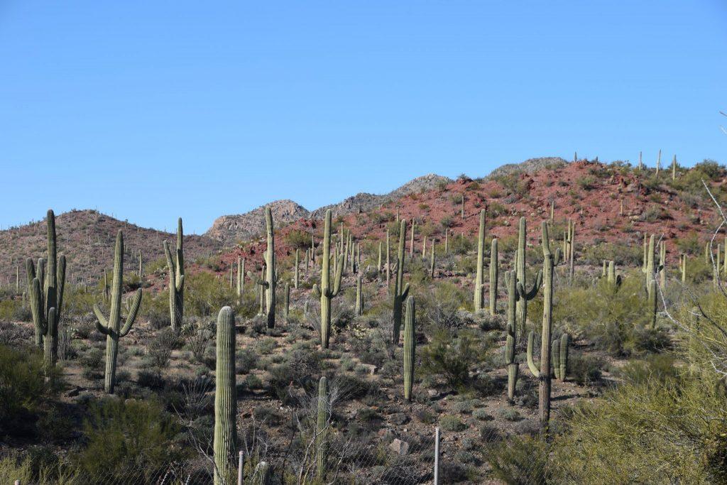 Rocky cactus covered landscape in Tucson, Arizona