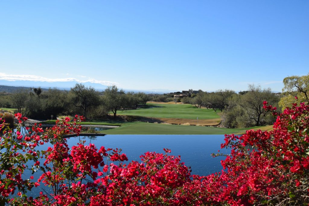 golf course with flowers in foreground, Tucson, Arizona