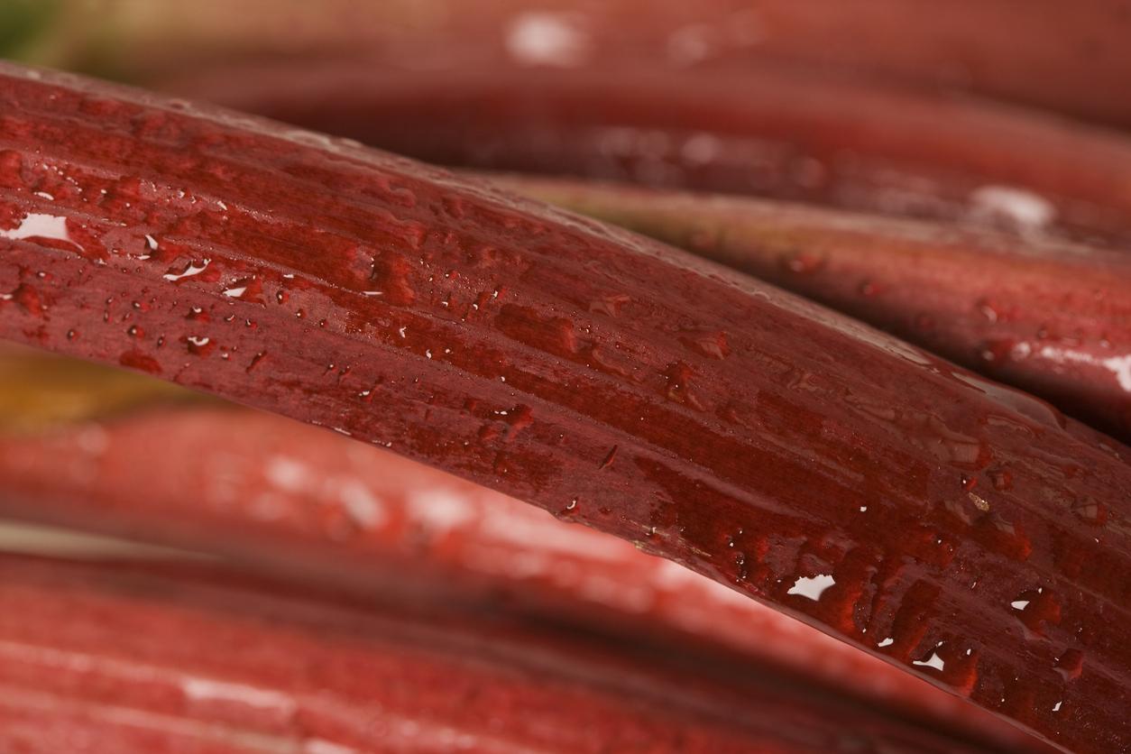 a macro image of rhubarb