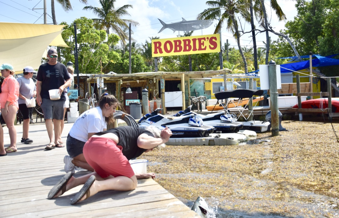 people feeding the tarpon fish at Robbie's on Islamorada Key, Florida
