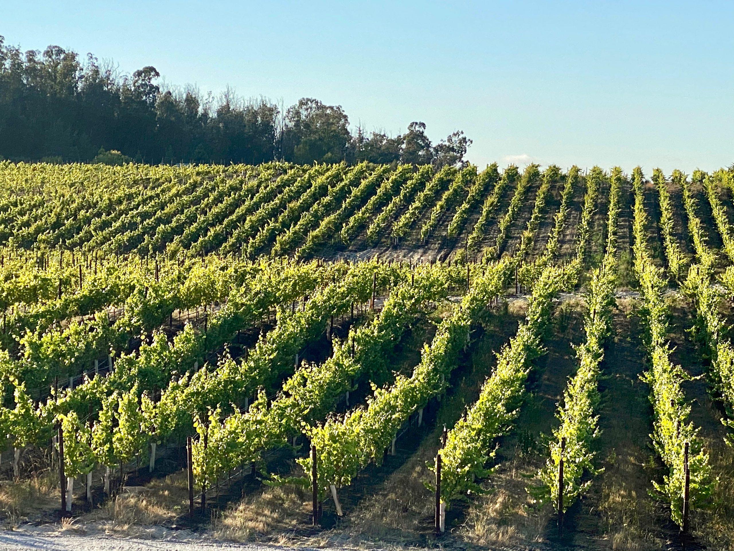 Vineyards near Paso Robles, CA