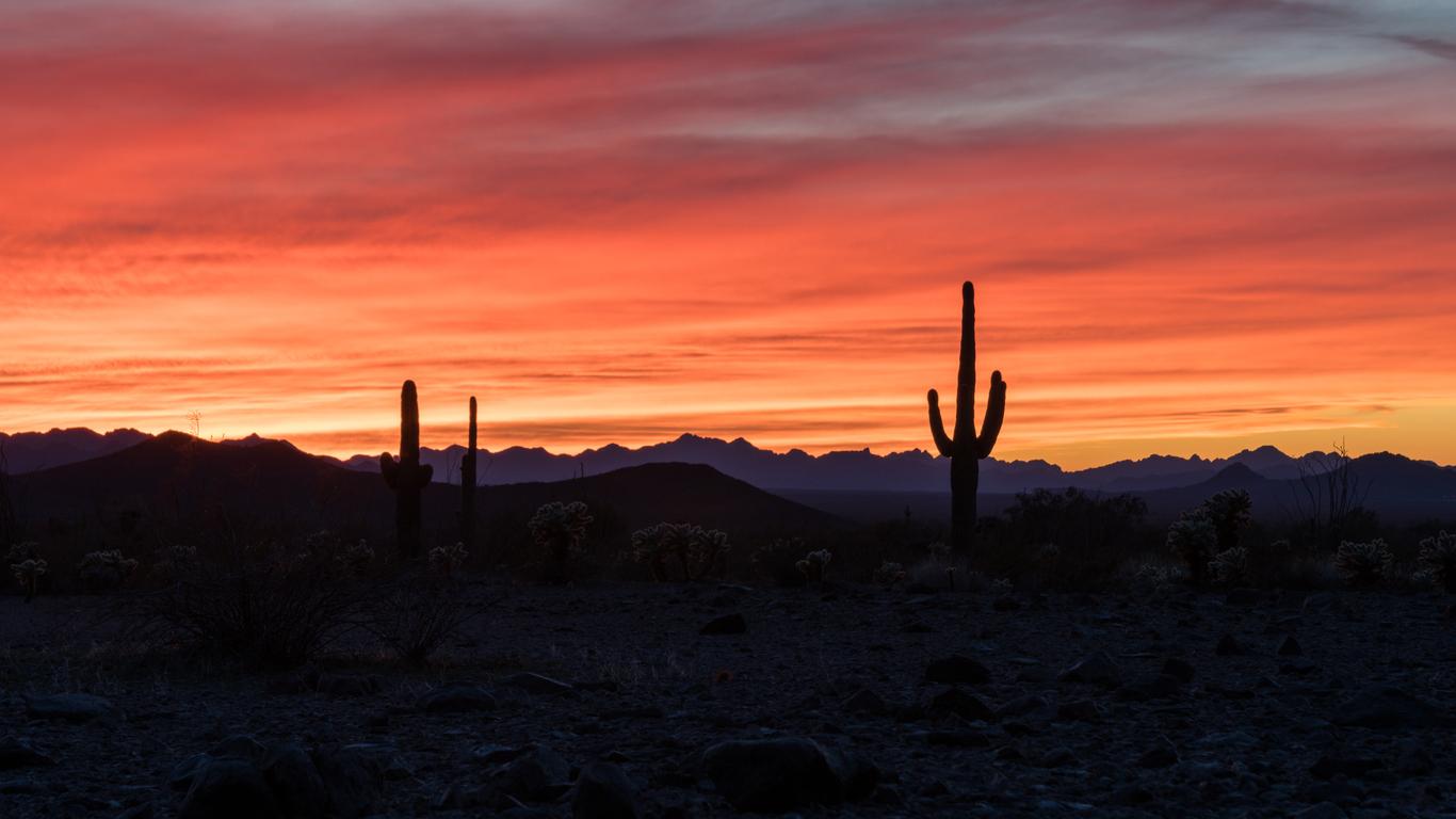 Backlit sunset scene in the KOFA National Wildlife refuge in Arizona