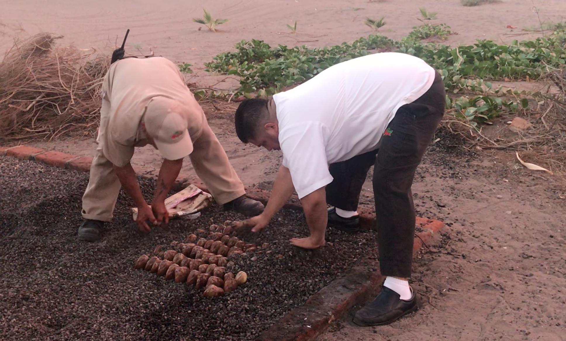 two men prepare chocolata clams to bake in the ground in Loreto, Mexico
