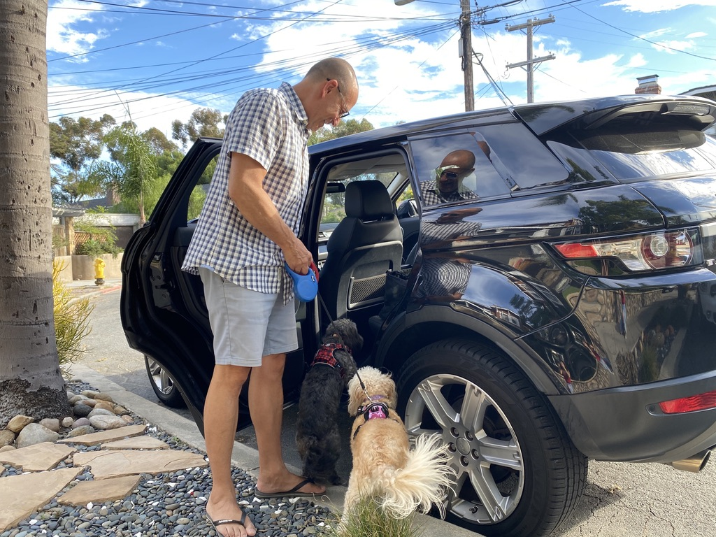 man gets into Black Range Rover Evoque with two small dogs on leashes