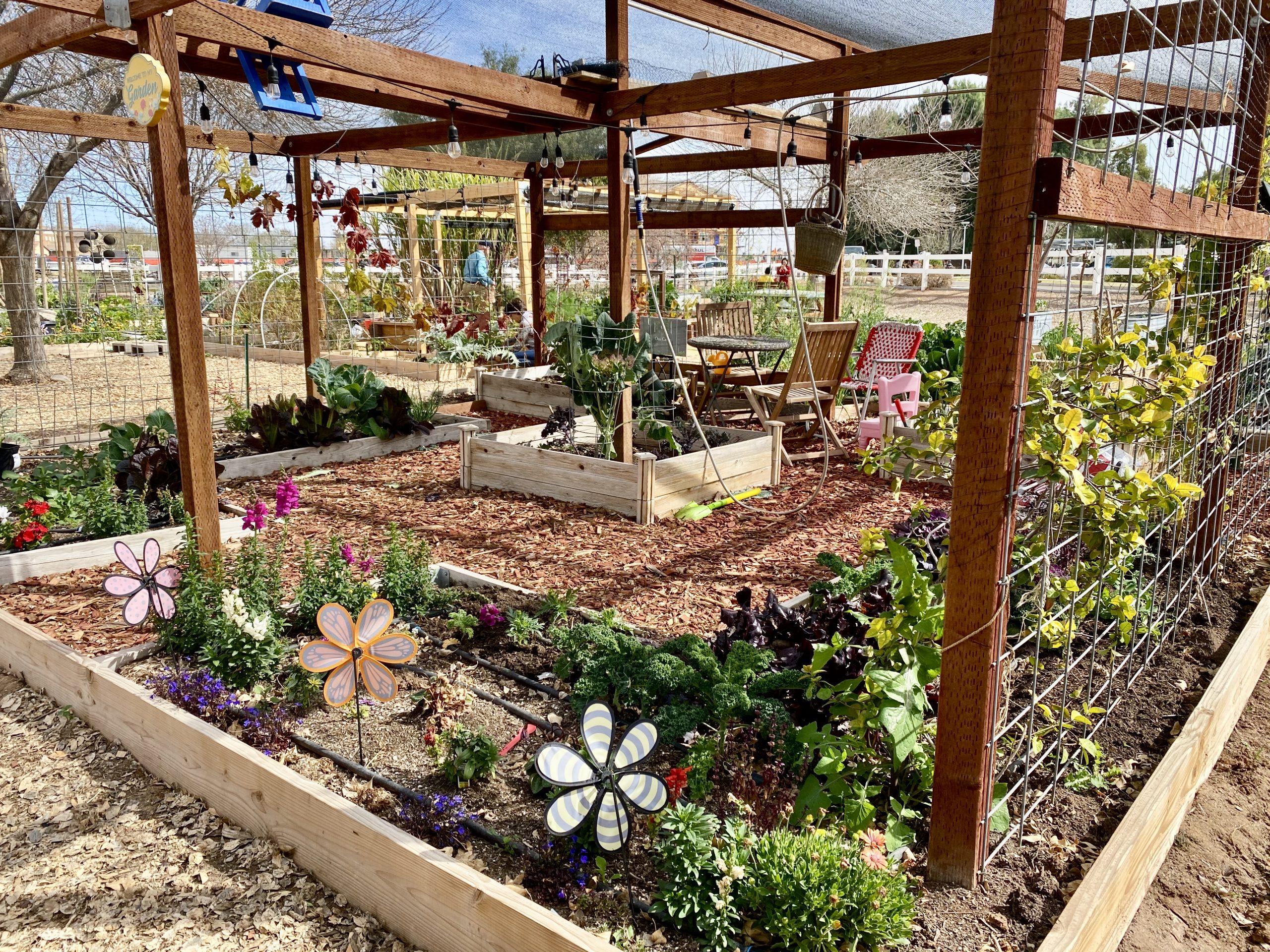 Modern farming at historic Agritopia in Gilbert, Arizona