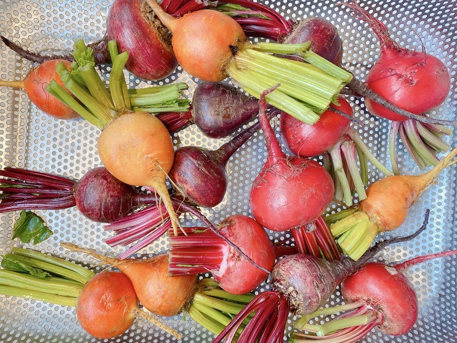 colorful fresh beets trimmed and ready to prepare