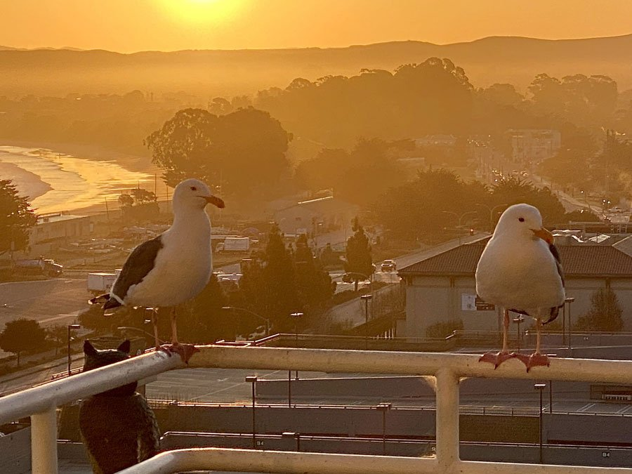 Two seagulls perch on the balcony railing of a suite at the Monterey Marriott Hotel in Monterey, CA