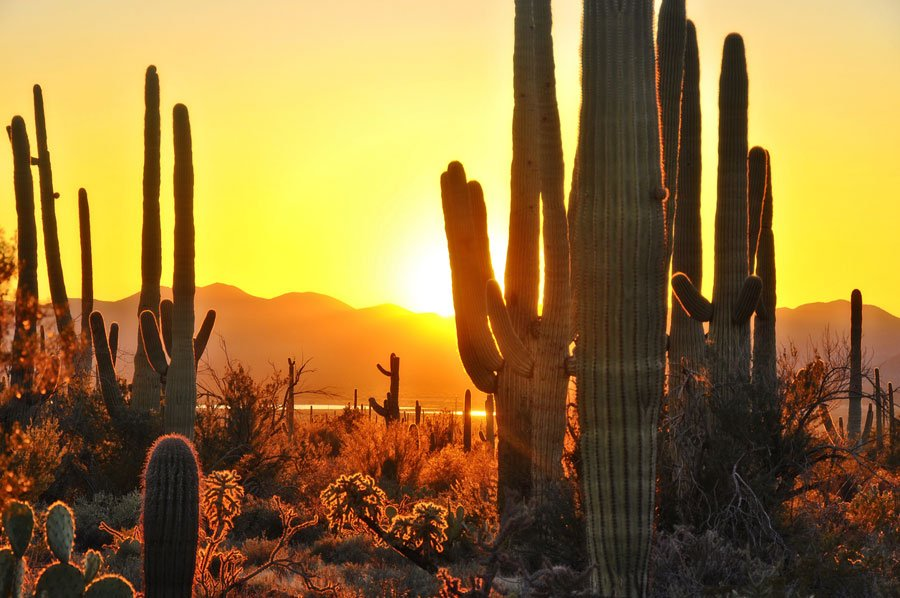 The 10 Best Gay-Friendly Tourist Spots in Scottsdale this Summer