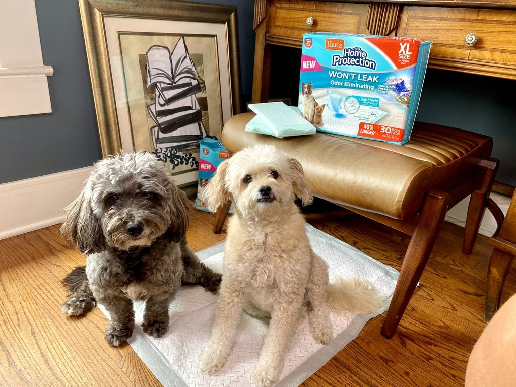 7 Tips for Dog Owners on How to Keep Your Home Clean and Smelling Fresh